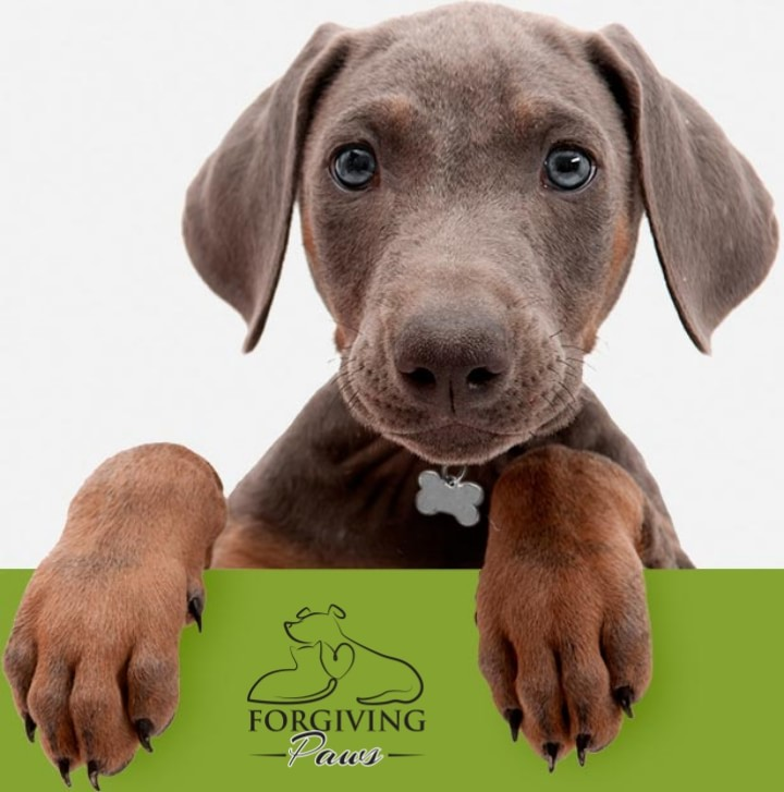 Supporting animal shelters and rescues through fundraising